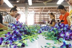 Orchids_quality_inspection